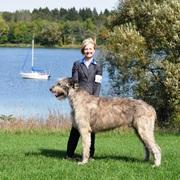 Wolfholm Irish Wolfhounds