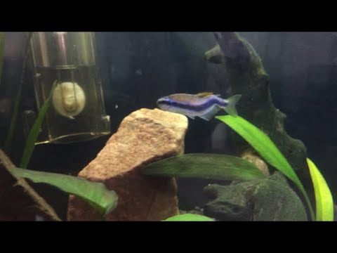 DEFORMED Tetra, and 100L tank update!