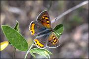 I colori di Buttefly