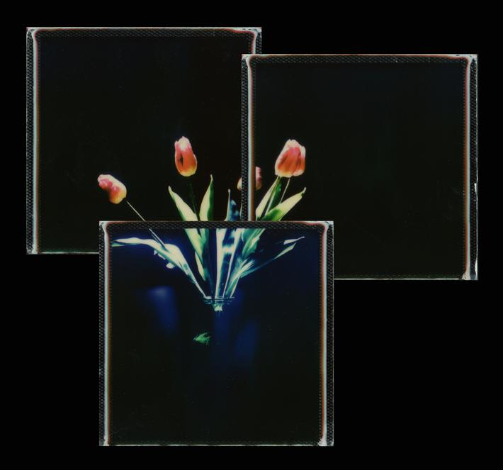vaso con tulipani