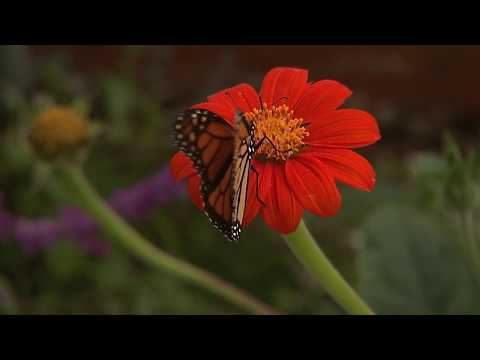 Butterfly Experience In Encinitas