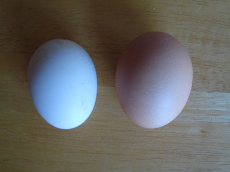 Ingham's first egg vs shop bought small egg