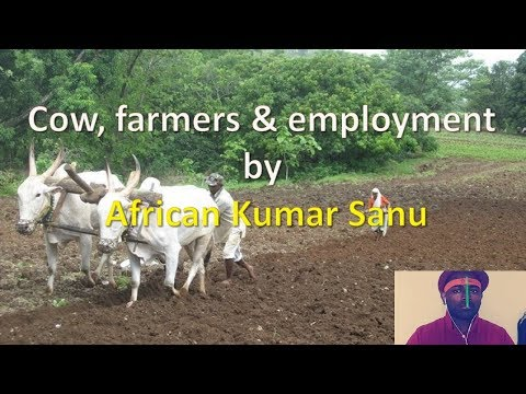 Cow, farmers & employment by African Kumar Sanu | The Social Posts