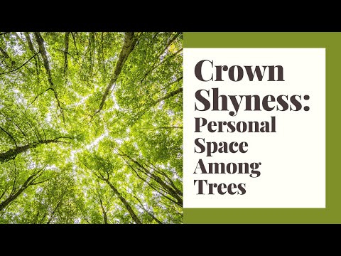 Crown Shyness: Personal Space Among Trees