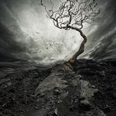 depositphotos_10214364-stock-photo-dramatic-sky-over-old-lonely