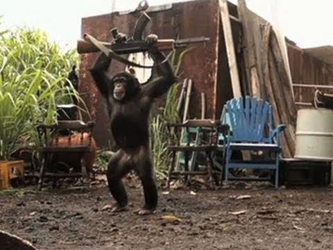 Give an ape an assault rifle - Good idea?