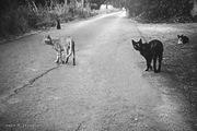 Τη μαύρη βόλτα μου όπως κάνω....