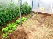 LFG Garden Visit to Doug's productive food garden