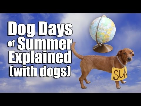 Dog Days of Summer Explained (with dogs)