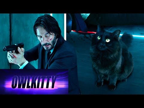 When your cat is a trained assassin (John Wick)