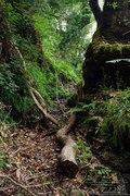 Deep forest (1)
