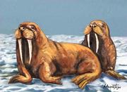 I'm The Walrus