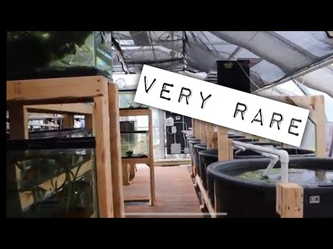 Secret Aquarium Tropical Fish Breeding Green House