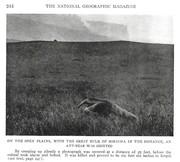 NGM 1920-09 Pic 9