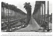 NGM 1920-09 Pic 2