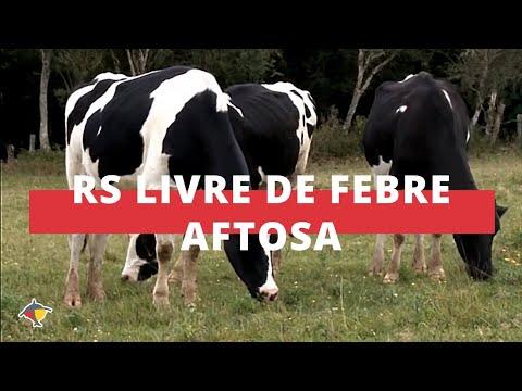 Rio Grande do Sul é reconhecido como área livre de febre aftosa sem vacinação | Programa Terra Sul