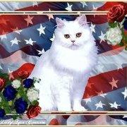 cats-america