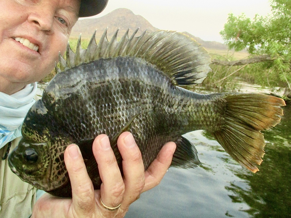 Bob Gaines Bluegill Fly Fishing