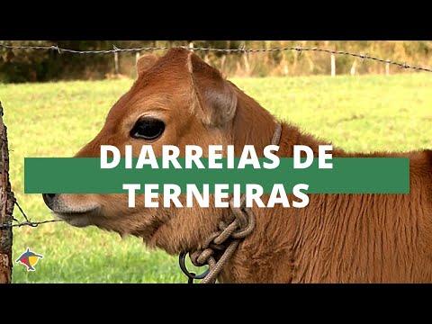 Como evitar as diarreias de terneiras | Programa Terra Sul