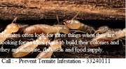 Tips To Prevent Termite Infestation at Your Home