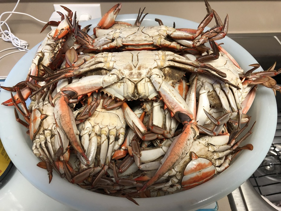 Blue Crab Bounty