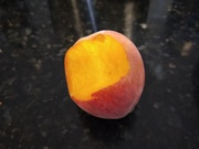 First peach of the season