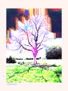 The old tree - test Sept.  2020