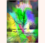 The old tree - test Sept.  2020 c + canvas, signed
