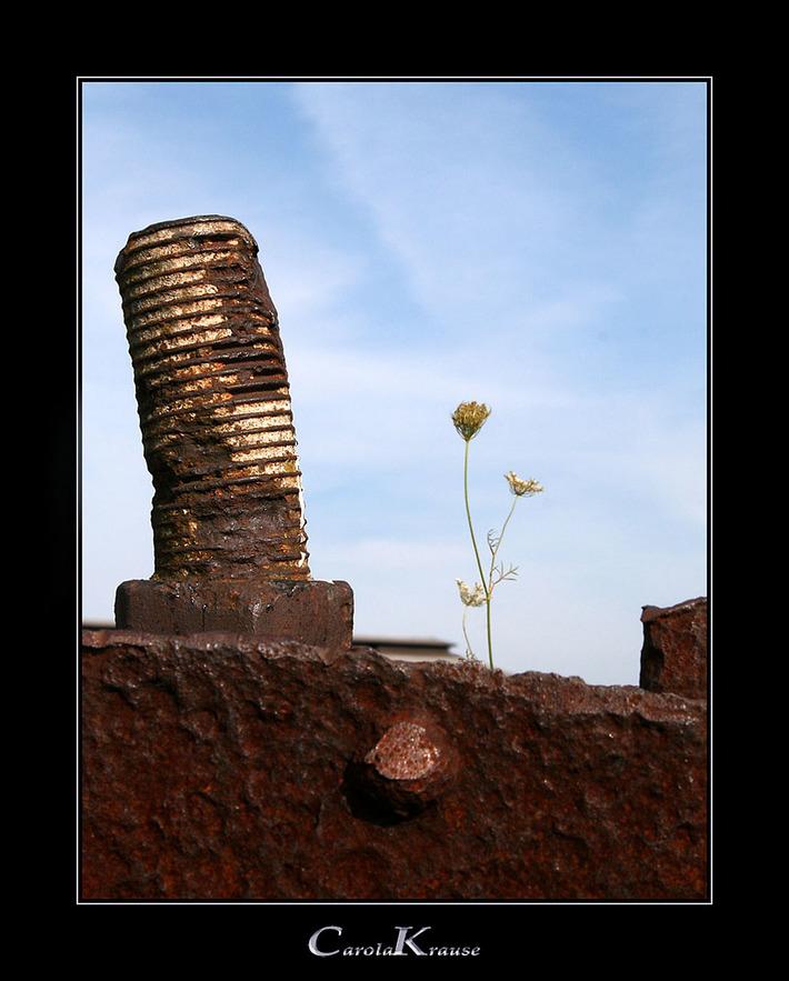 New Life between Decay