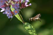 Tipo di vespa