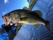 The Best Largemouth This Morning.....9/12/2020