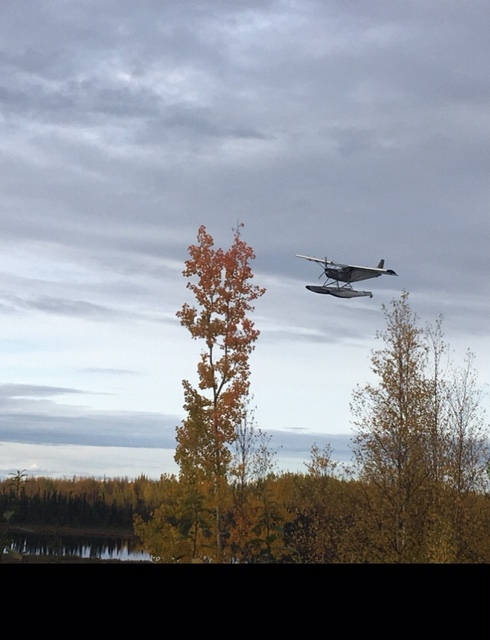 Fall Flying by My Home