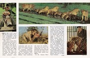 1974 - 2 March ~ The Big Cats (inside)