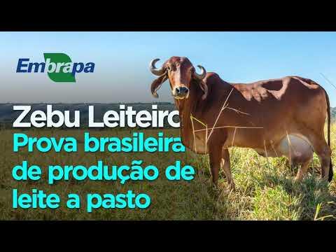 Prova Brasileira de Leite a Pasto do Zebu Leiteiro do CTZL