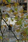 Φθινόπωρο μου, μάρανε φύλλα μόνο...