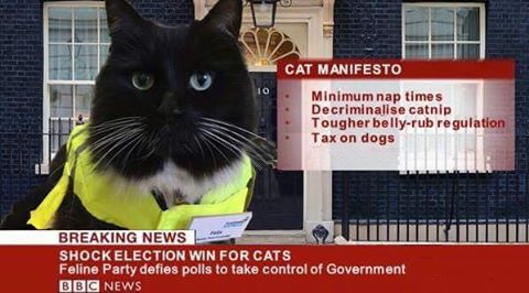 Cat Manifesto