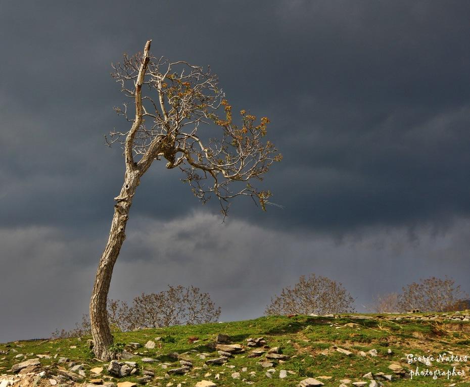 Κάθε δέντρο μια ιστορία!