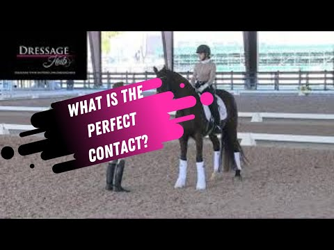 What Is The Right Amount Of Contact In The Reins In Dressage?