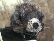 Snow doodle Ollie!