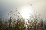 Δειλινό στην λίμνη Καϊάφα... (2)