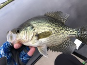 Few of Today's Crappie.....11/1/2020