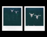 Bull & Deer