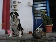Σαν τον σκύλο με τη γάτα...