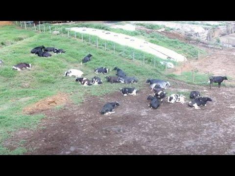 Geração de energia elétrica e produção de biofertilizantes a partir de dejetos da atividade pecuária
