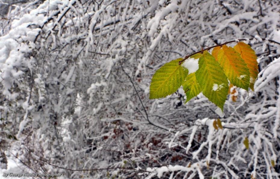 Καλό μήνα και καλό χειμώνα!