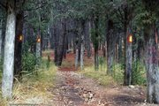 Το σηματοδοτημένο δάσος