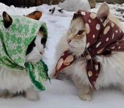 russian cats just had to