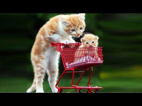 Cute Kittens Doing Funny Things - Kitten Videos #2