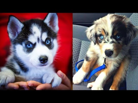 Cute and Funny Dog Videos - Funniest Dogs