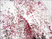 Anteprima/Thumbnail